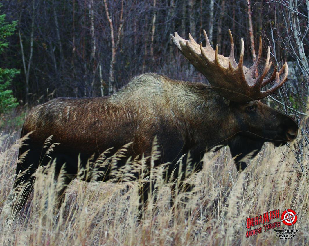 DM214 Moose thumbnail
