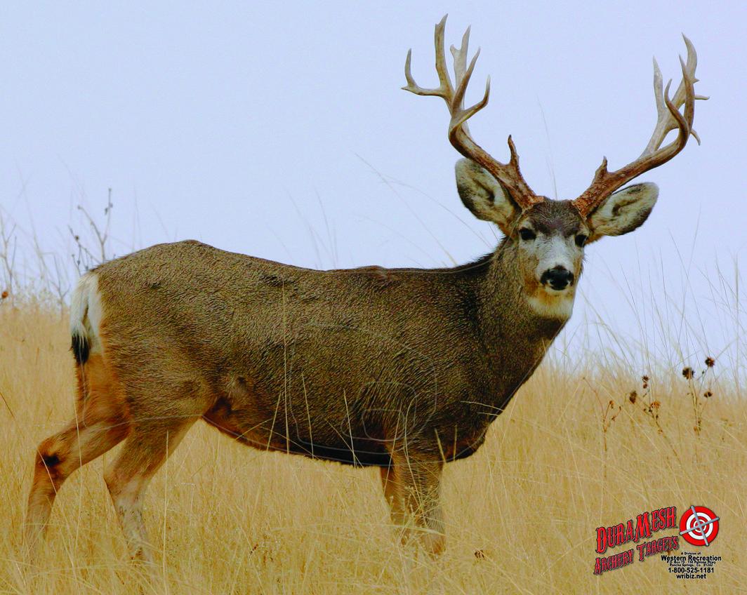 DM216 Mule Deer #2 thumbnail