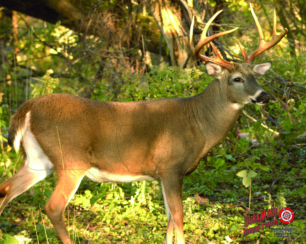 DM221 Whitetail Deer #3 thumbnail