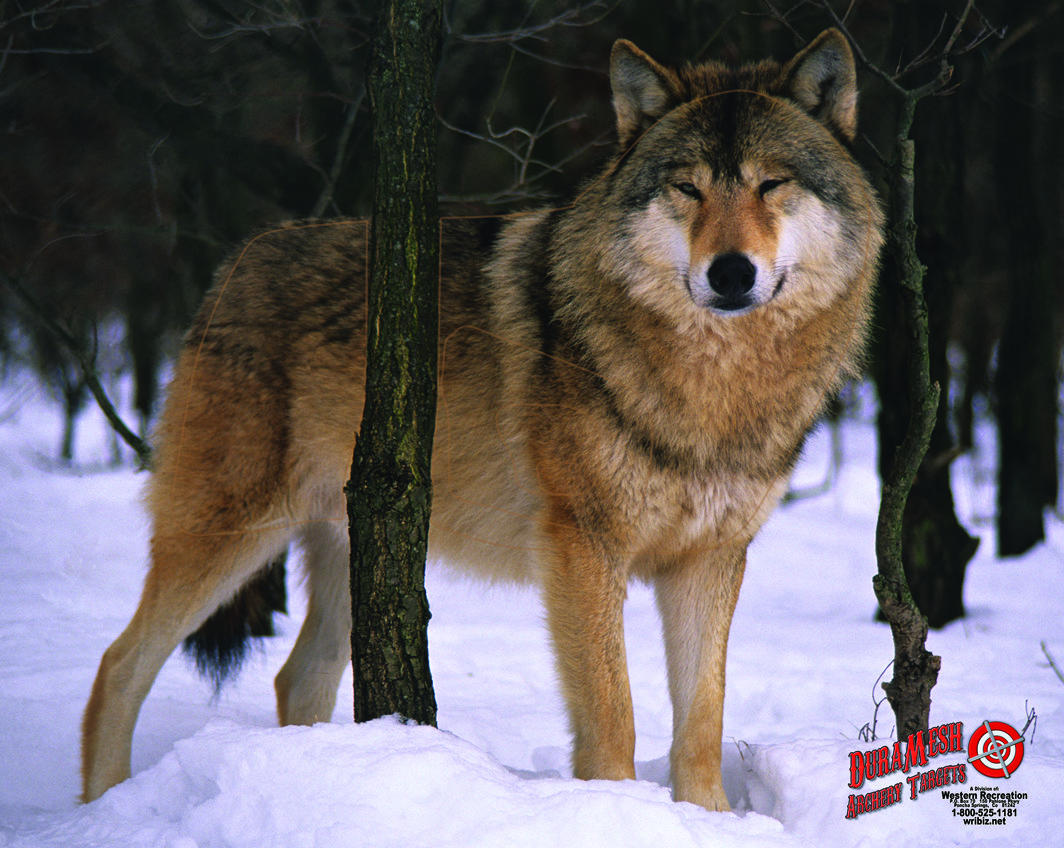 DM223 Wolf thumbnail