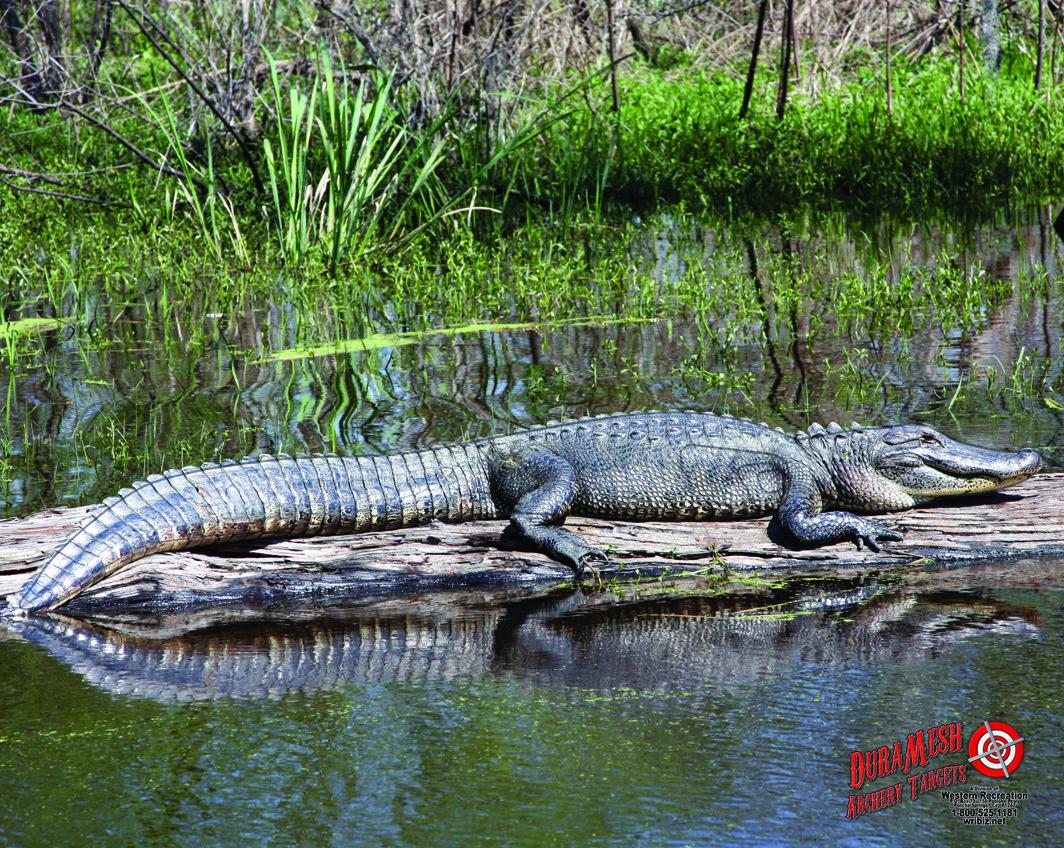 DM224 Gator thumbnail