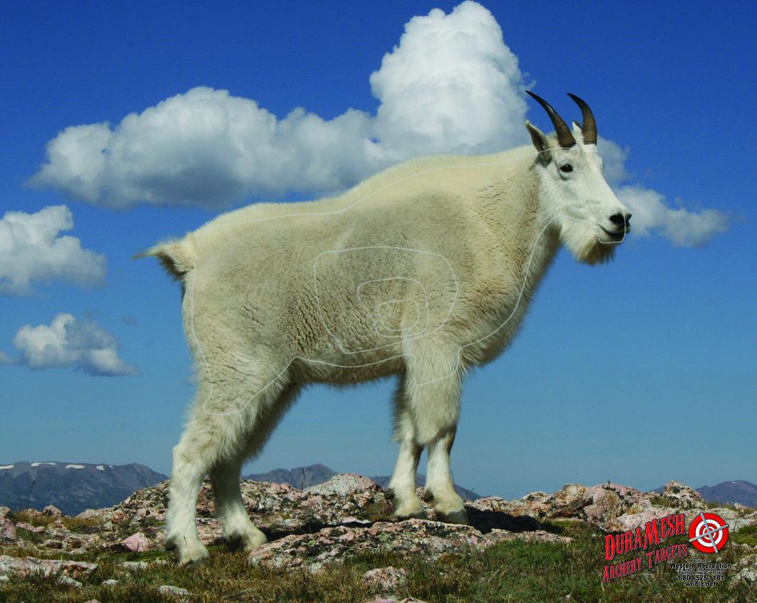 DM225 Mtn Goat thumbnail