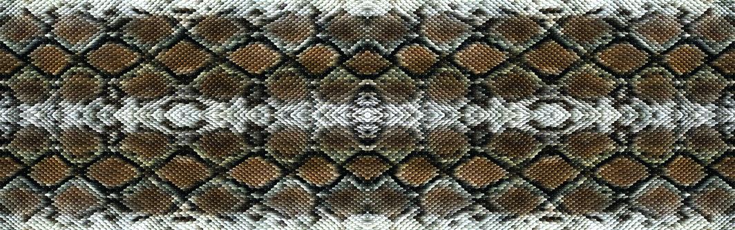 #AW602 7″ Snake Skin thumbnail