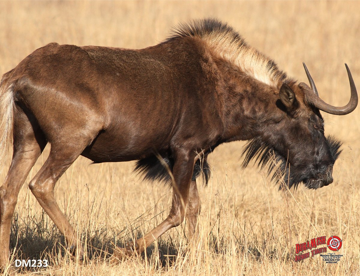 DM233 Black Wildebeest thumbnail