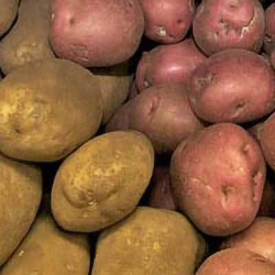 Image of red potatoes, and potatoes.