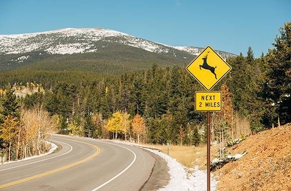 Seasonal Driving + Wildlife Safety thumbnail