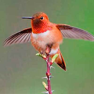 Wild Bird thumbnail