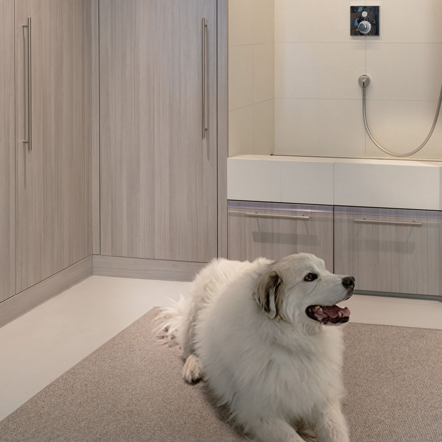 5 Ways to Take Your Pet into Account When Designing Your Living Spaces thumbnail