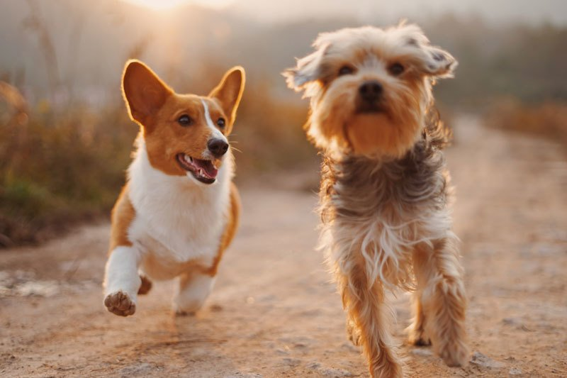 Dogs Running Happily