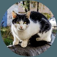 Feral Cat thumbnail