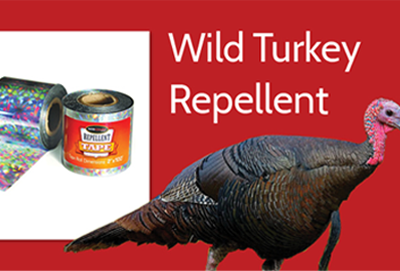 What Are Wild Turkeys Afraid Of? thumbnail