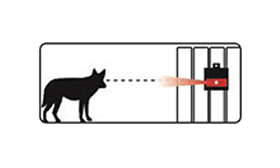 Illustration of coyote seeing Nite Guard deterrent lights