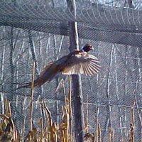 Oakwood Game Farm using bird netting