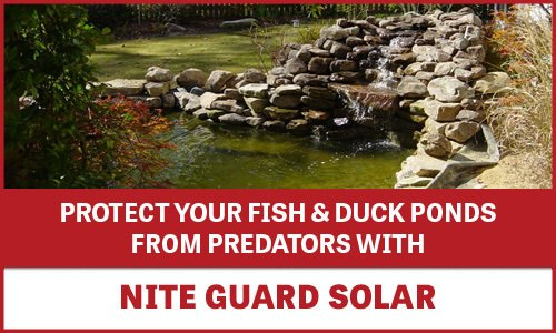 Fish and Duck Ponds - Protected with Nite Guard Solar Banner