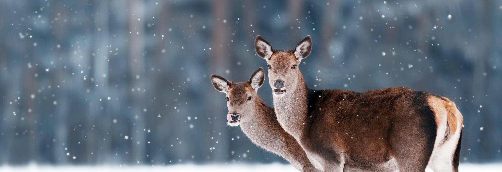 Two deer in snow - banner for Deer Repellent Page