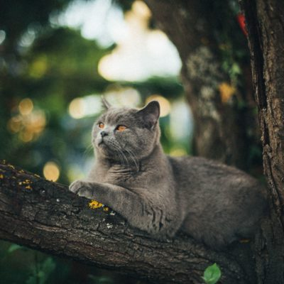 3 Tips to Solve Your Feral Cat Problem thumbnail
