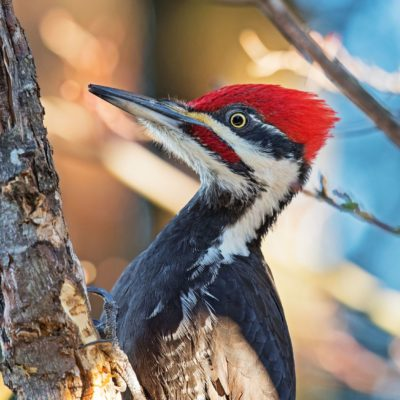 Keep Woodpeckers Away