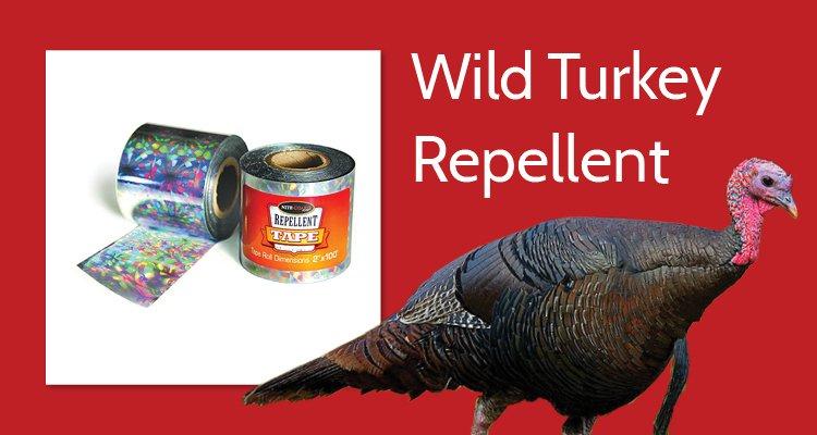 Wild Turkey Repellent