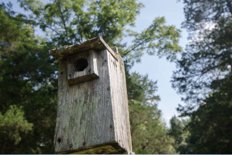 A birdhouse outside