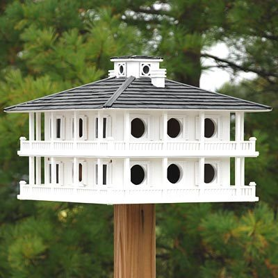 How to Protect Purple Martins from Predators and Keep them Thriving in Your Yard thumbnail