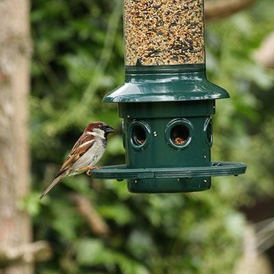 Wild Bird Feeders & Food thumbnail