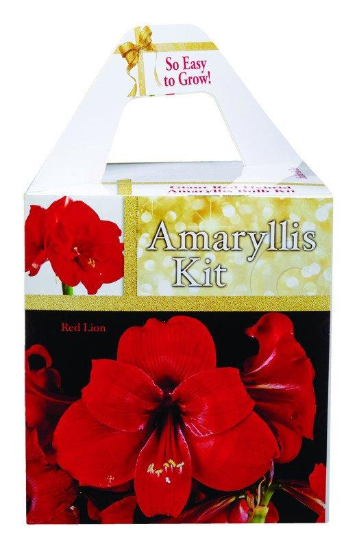 Amaryllis Bulb Kit thumbnail