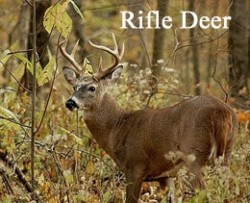 Rifle_deer