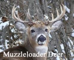 muzzle_deer