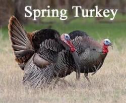 spring-turkey